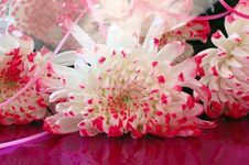 Close-up Of Chrysanthemum Flowers. Royalty Free Stock Photography