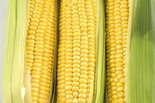 Free Corn Royalty Free Stock Photo - 8459625