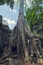 Free Angkor Wat Royalty Free Stock Images - 8467549