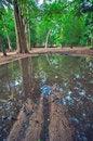 Free Angkor Wat Royalty Free Stock Image - 8468846