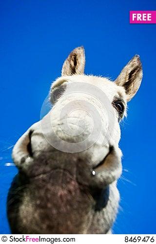 Free White Donkey Royalty Free Stock Image - 8469476
