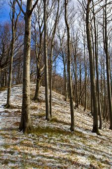 Free Mountain Forest During Winter Royalty Free Stock Photo - 8461525