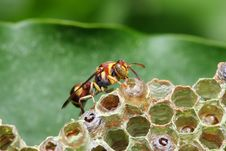 Free Wasp On Nest Stock Photo - 8462910
