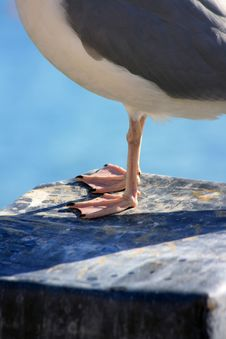 Free Seagulls Feet Stock Photos - 8463373