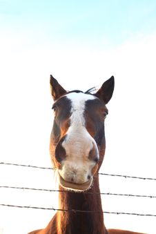 Free Funny Horse Stock Image - 8463441
