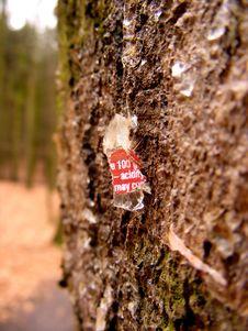 Acid Glass Hurt Tree Royalty Free Stock Photography