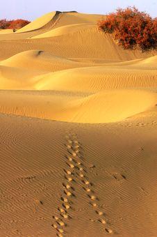 Free Desert Royalty Free Stock Photos - 8463928