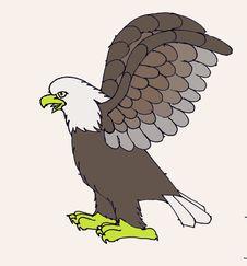 Free Bald Eagle Royalty Free Stock Photo - 8464195