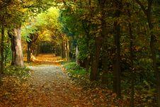 Free Autumn Park Stock Images - 8465294