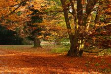 Free Autumn Tree Royalty Free Stock Photography - 8465297