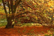 Free Autumn Tree Stock Image - 8465301