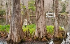 Free Swamp Garden Stock Photos - 8465533