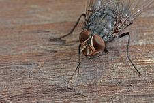 Free Closeup Of Fly On Wood Royalty Free Stock Image - 8465906