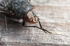 Extreme Closeup Of Fly Royalty Free Stock Photos