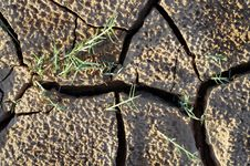 Craked Mud By Drought And Strands Stock Images
