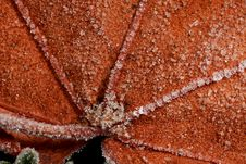Free Closeup Of Frost On Leaf Stock Images - 8466344