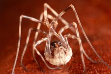 Free Harvestman On Leaf Royalty Free Stock Photos - 8466508