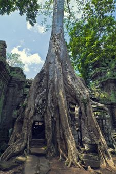 Free Angkor Wat Royalty Free Stock Images - 8467549