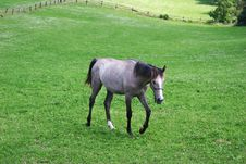 Free Horse On The Green Field Royalty Free Stock Photo - 8467575