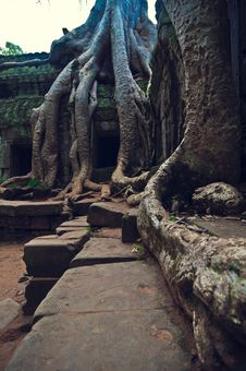 Free Angkor Wat Stock Photos - 8468123