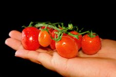 Tiny Red Tomato Royalty Free Stock Image