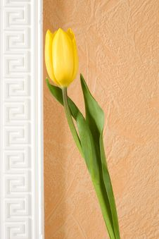 Free Yellow Tulip Stock Photo - 8468660