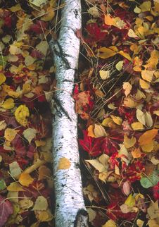 Fall Forest Color Stock Photography