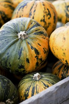 Free Squash Royalty Free Stock Photo - 8471375