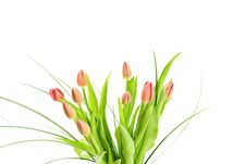 Free Bouquet Of Tulips Isolated On White Stock Images - 8472784