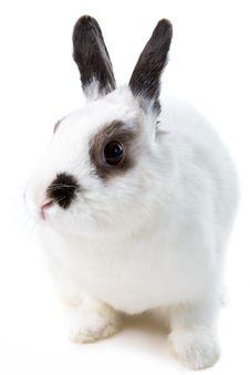 Free White Rabbit Royalty Free Stock Image - 8473026