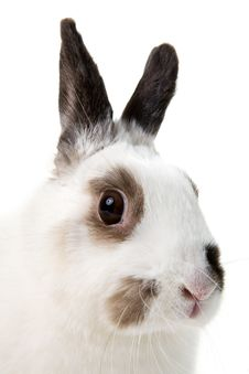Free White Rabbit Royalty Free Stock Photography - 8473447