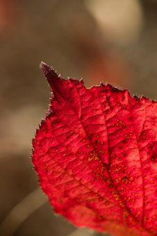 Free Leaf Stock Photo - 8474550