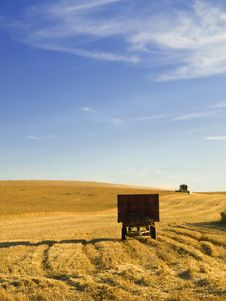 Free Wheat Harvesting Stock Image - 8476531