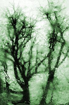 Free Reflection Of Tree Stock Photos - 8476803
