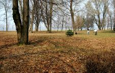 Park In Petergof Stock Photos