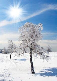 Free Winter Tree Stock Image - 8477171