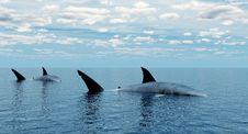 Free Shark_Alone Stock Photo - 8477400