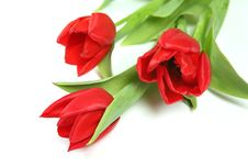 Free Red Tulips Royalty Free Stock Image - 8477576