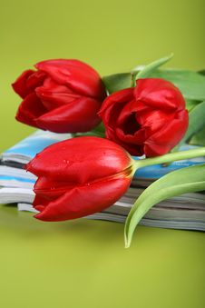 Free Red Tulips Royalty Free Stock Images - 8477649