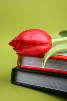 Free Red Tulips Stock Photo - 8477710