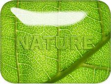 Free Nature Through Glass Royalty Free Stock Photos - 8477838
