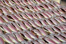 Free Dried Fish Royalty Free Stock Photos - 8479238