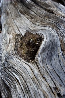 Free Abstract View Of Wood With Close Up Stock Image - 8479711