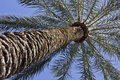 Free Palm Tree Perspective Shot From Below Stock Images - 8483304