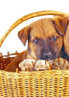 Free Puppy Stock Photo - 8480000