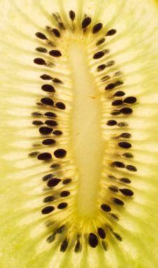 Free Kiwi Stock Images - 8480014
