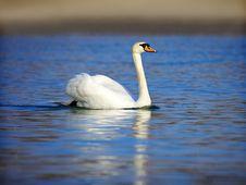Free Swan Stock Photos - 8480523