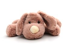 Free Puppy Dog Toy Stock Photos - 8480573