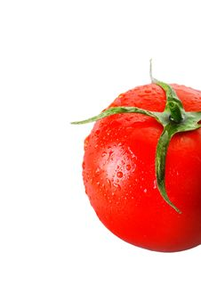 Free Tomato 11 Royalty Free Stock Photo - 8480665