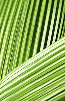 Free Lines On Leaves Royalty Free Stock Photo - 8482475